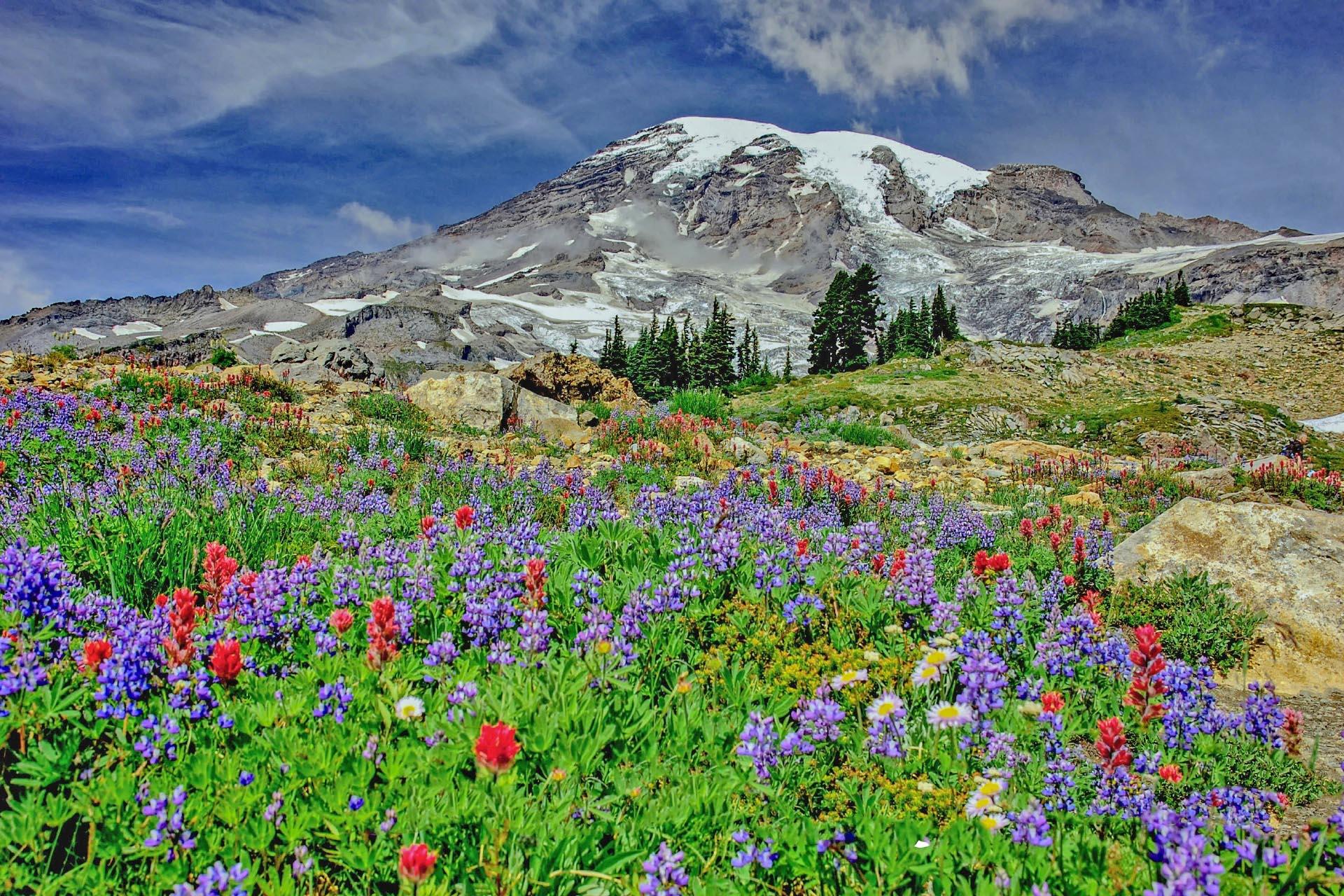 マウントレーニアと花々 アメリカの風景