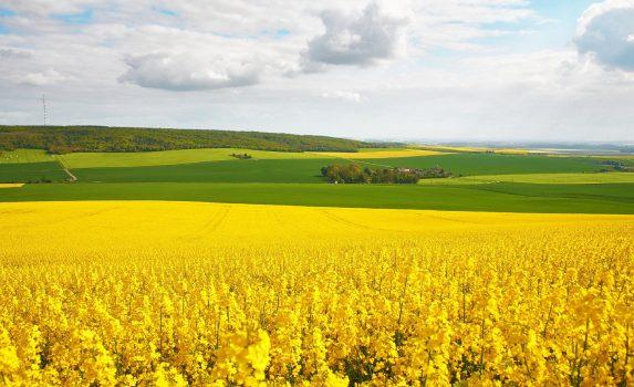 菜の花畑と牧草地の風景 フランスの風景