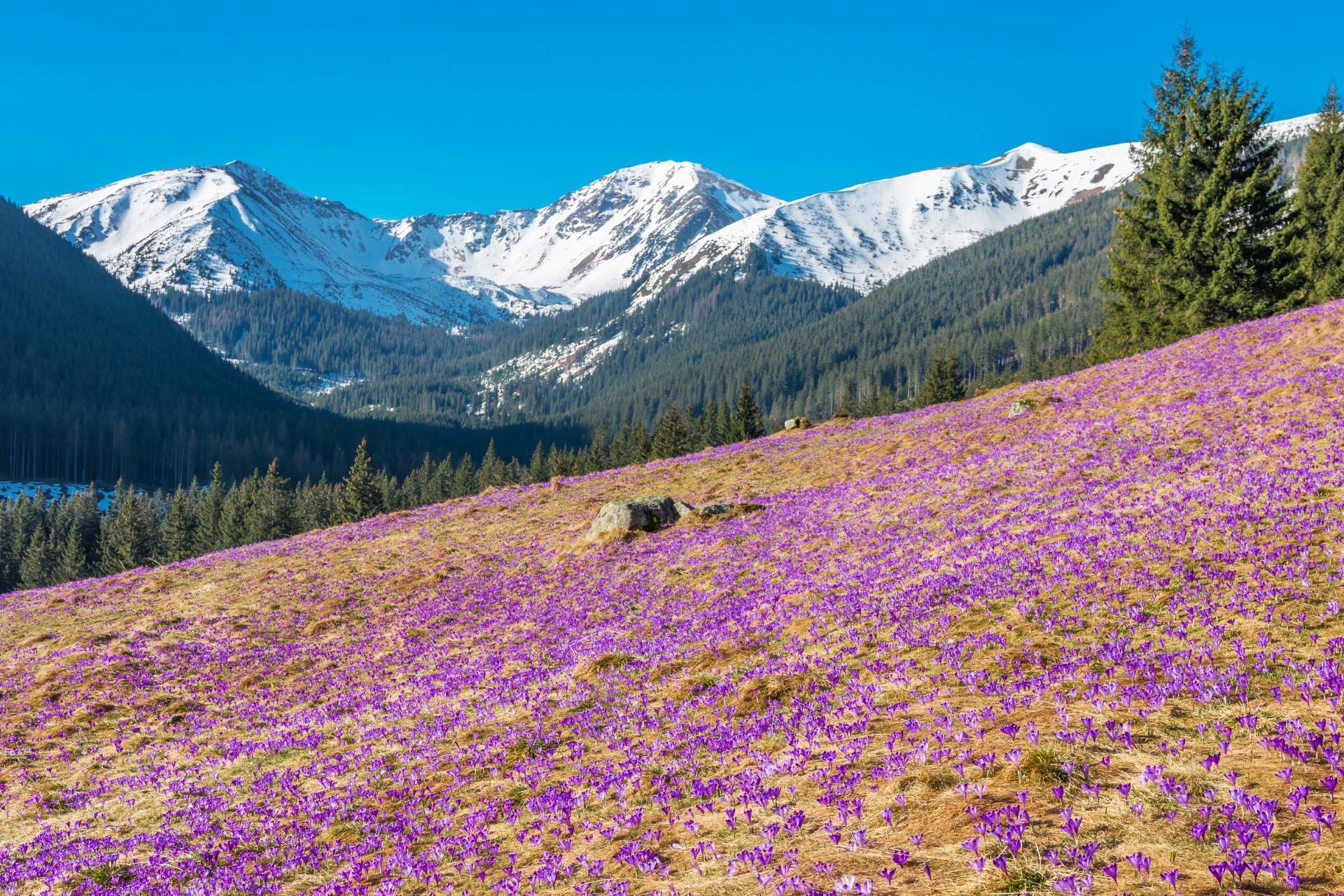 春のタトラ山脈の風景 ポーランドの風景