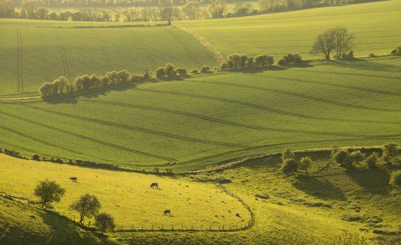 ハンプシャーの風景 英国の風景