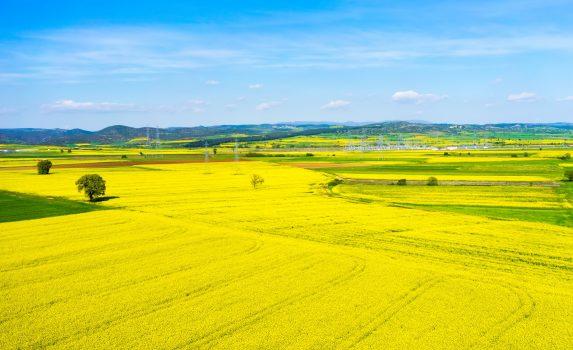 空から見る菜の花の風景 ギリシャの風景