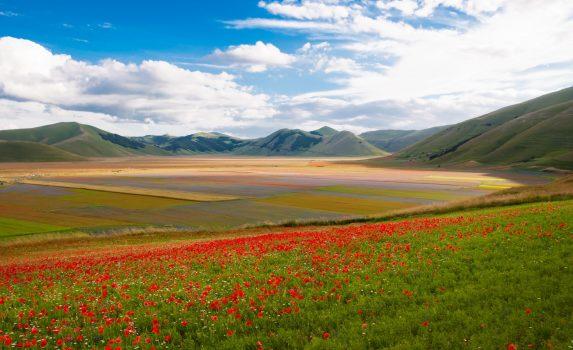 カステッルッチョ・ディ・ノルチャの花畑の風景 シビッリーニ山地 イタリアの風景