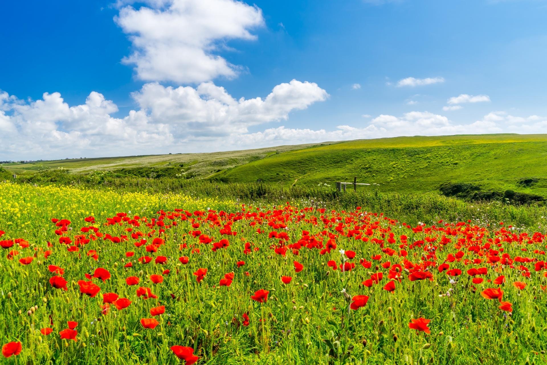 ポピーの咲く風景 イングランドの風景