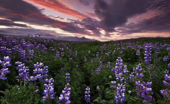 夕暮れの風景 アイスランドの風景