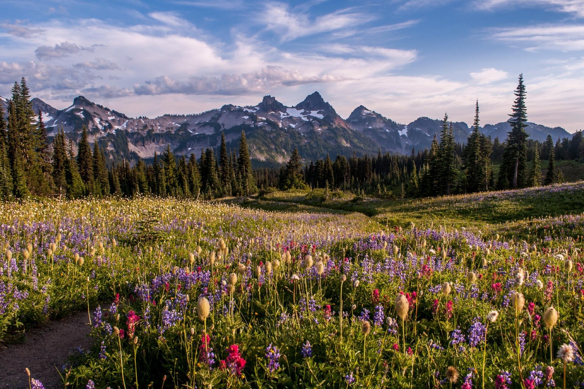 マザマ・リッジの花々 アメリカの風景