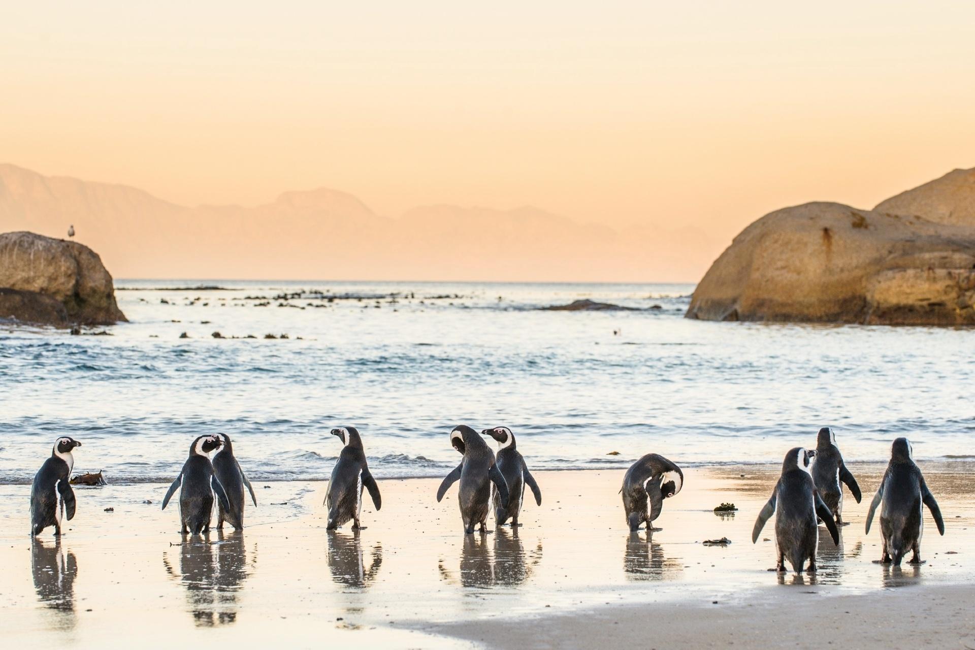 夕暮れの浜辺に佇むケープペンギン 南アフリカの風景