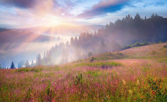 夏の朝のカルパティア山脈 ウクライナの風景