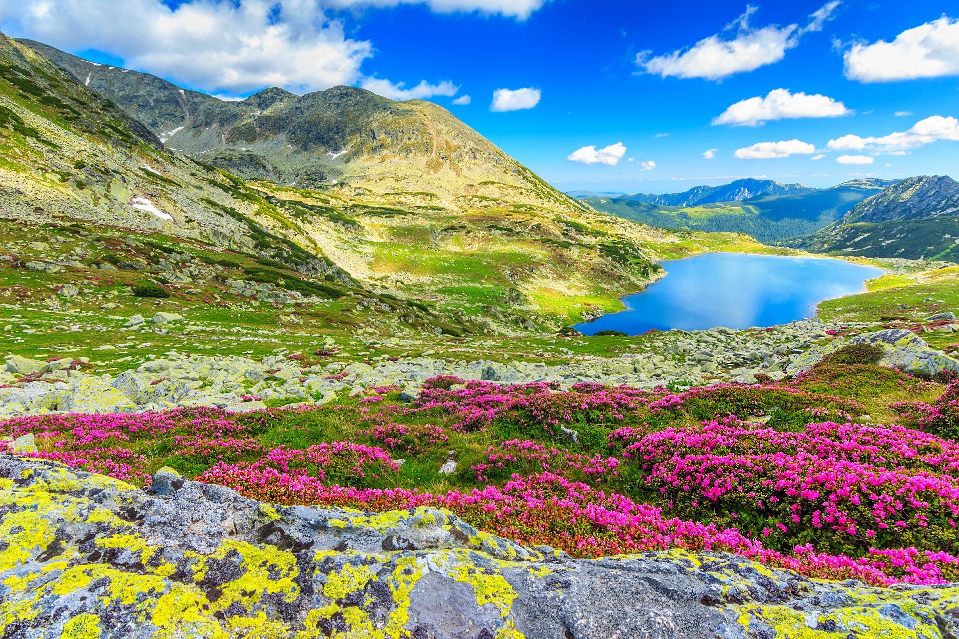花々と氷河湖 カルパティア山脈の風景 ルーマニアの風景