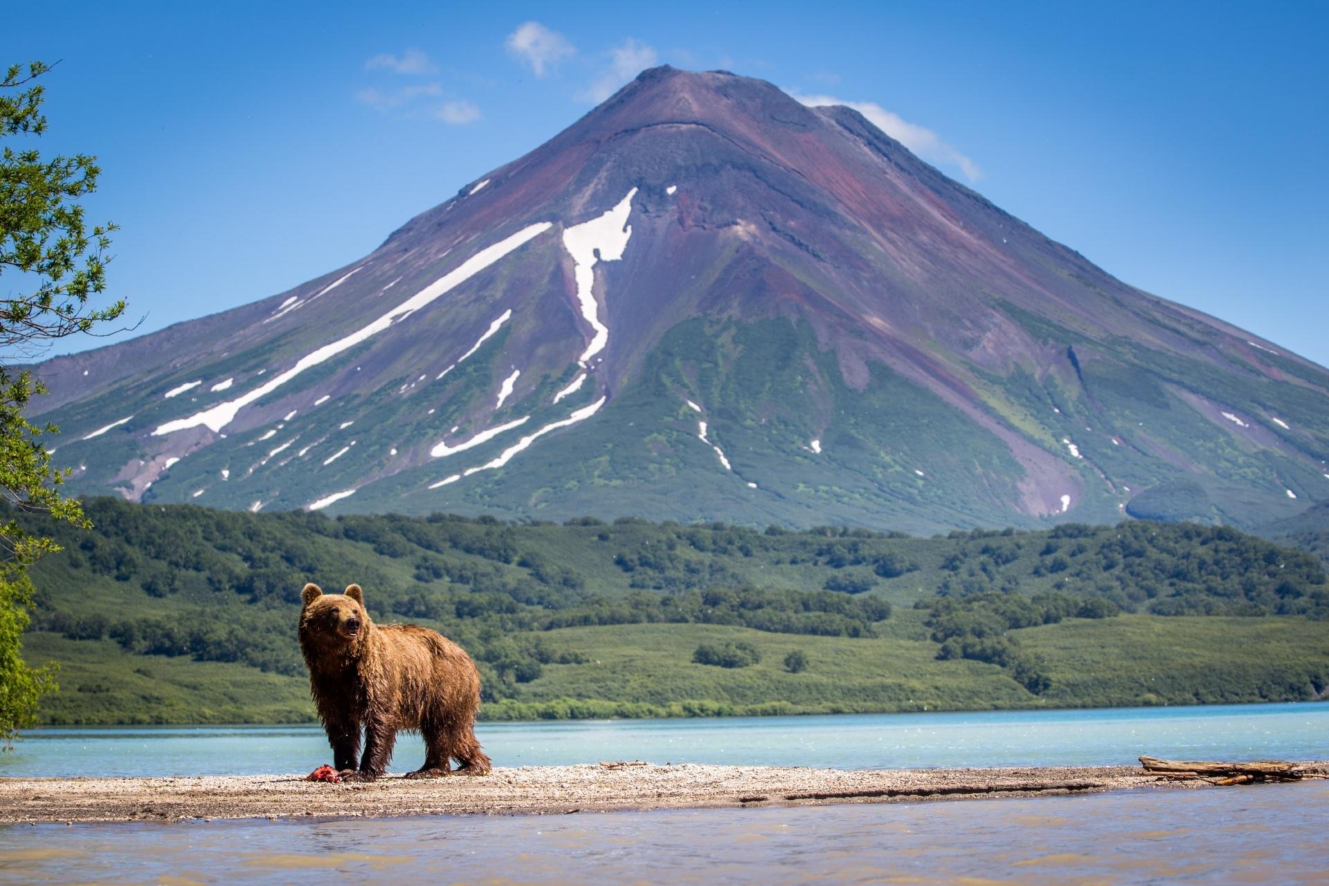 ヒグマのいる風景 カムチャッカ ロシアの風景