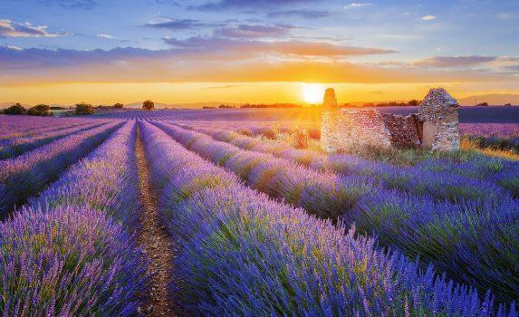 ラベンダー畑の向こうに沈みゆく夕日 プロヴァンス フランスの風景