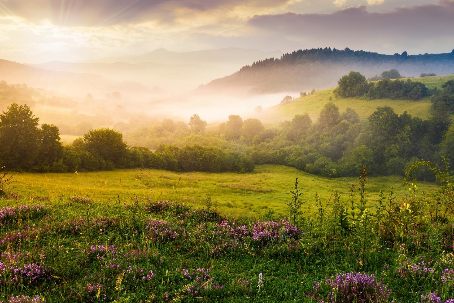 朝霧に包まれる夏の朝のカルパティア山脈の風景 ウクライナの風景