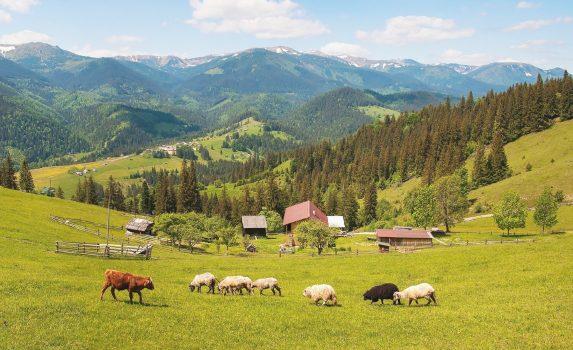 夏のカルパティア山脈 ウクライナの風景