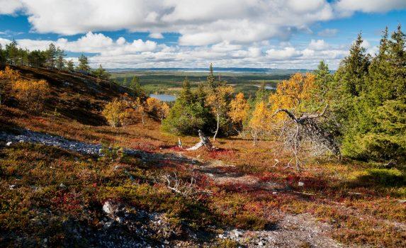 夏のフィンランド 森と湖の風景 フィンランドの風景