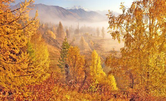秋の朝の森とアルタイ山脈の風景 カザフスタンの風景