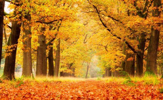 秋のデ・ホーヘ・フェルウェ国立公園 オランダの風景
