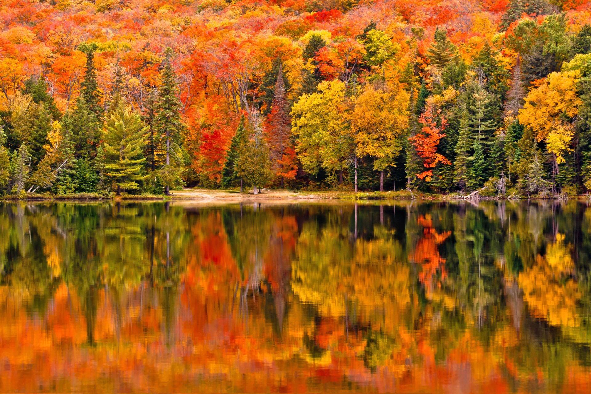 水面に反射する紅葉 アルゴンキン州立公園 秋のカナダの風景