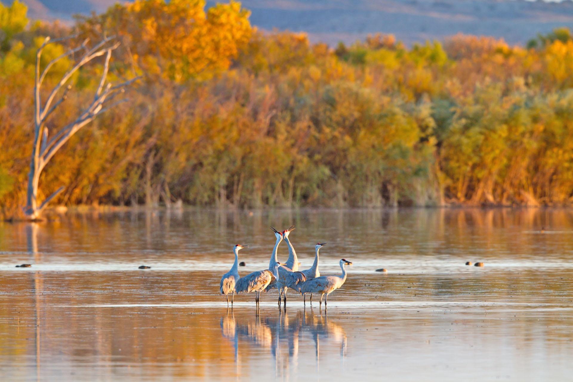 秋のニューメキシコ アメリカの風景