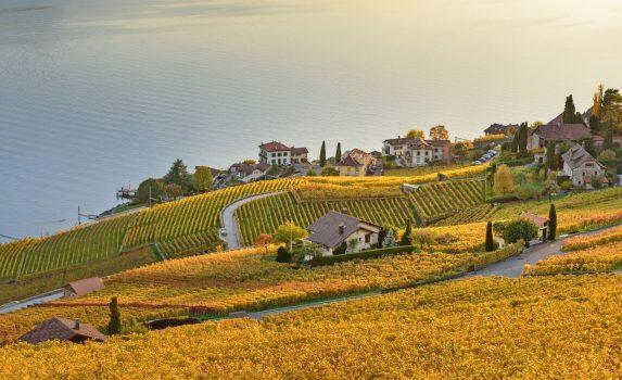 秋の夕暮れのブドウ畑 ラヴォー スイスの風景