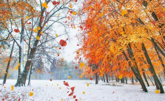 紅葉のブナの森と雪の風景 ウクライナの風景