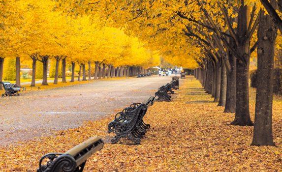 秋のロンドン リージェンツパークの並木道 イギリスの風景