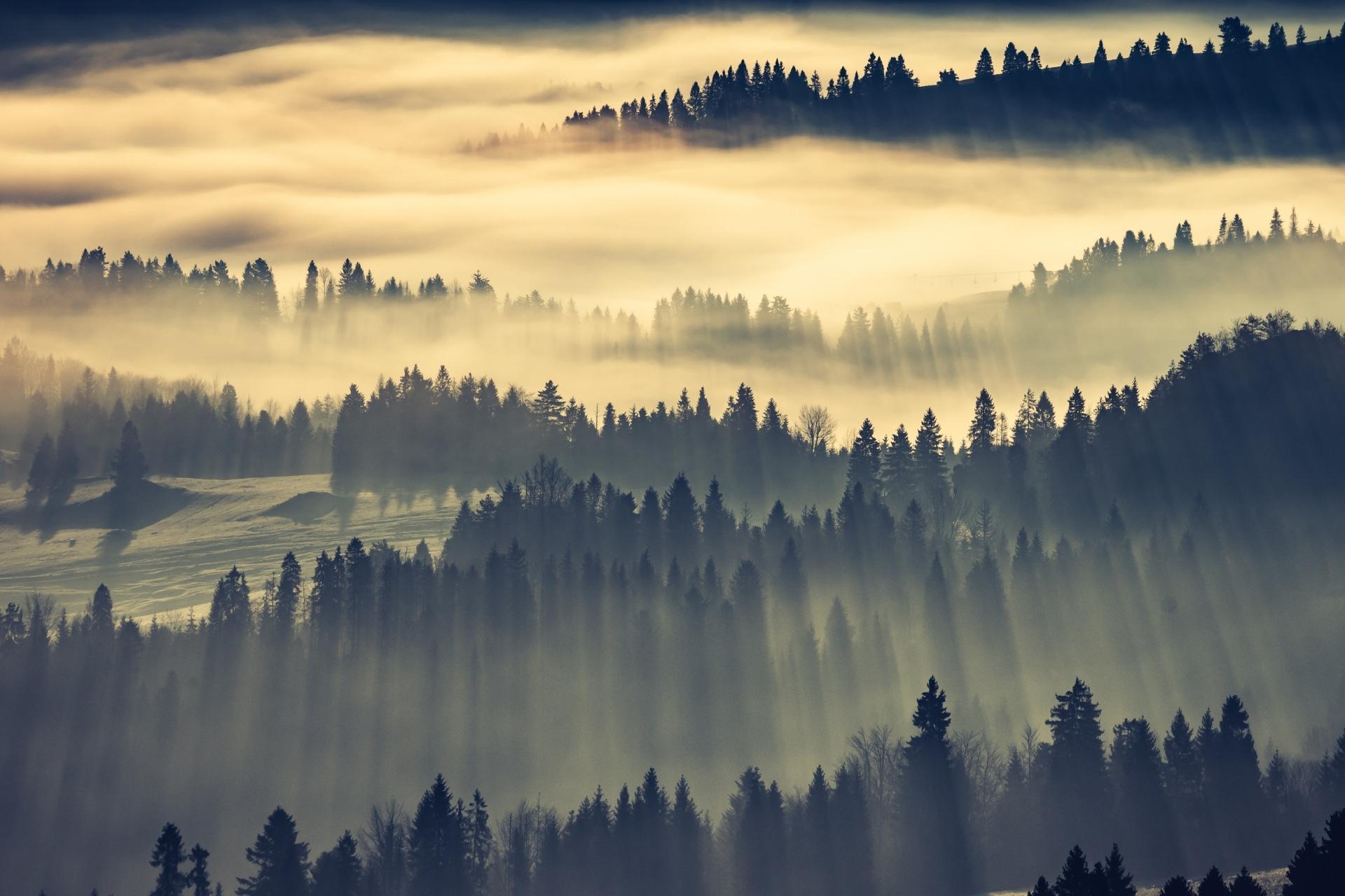 朝霧の森の風景 ポーランドの風景