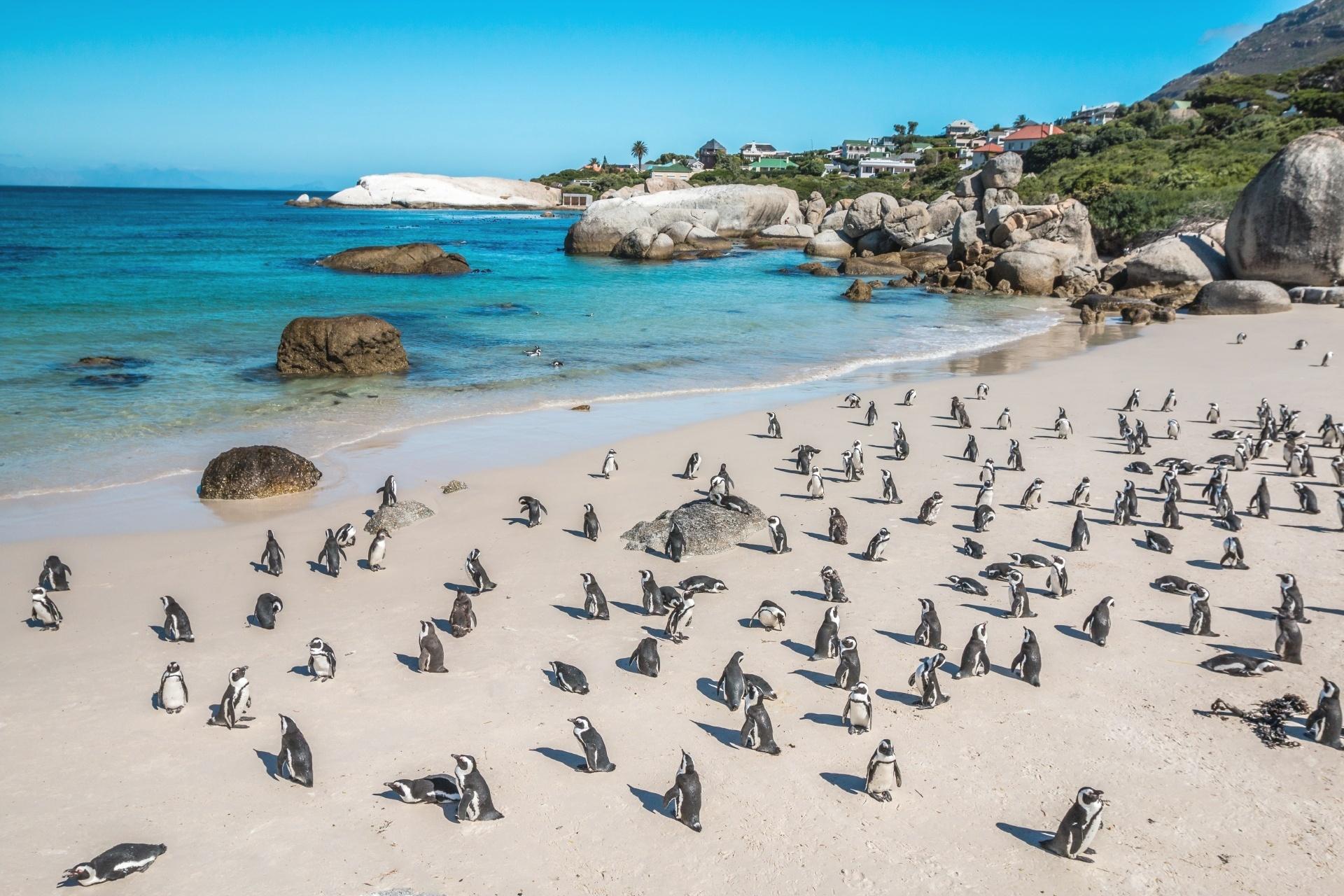 ボウルダーズ・ペンギン・コロニー 南アフリカの風景