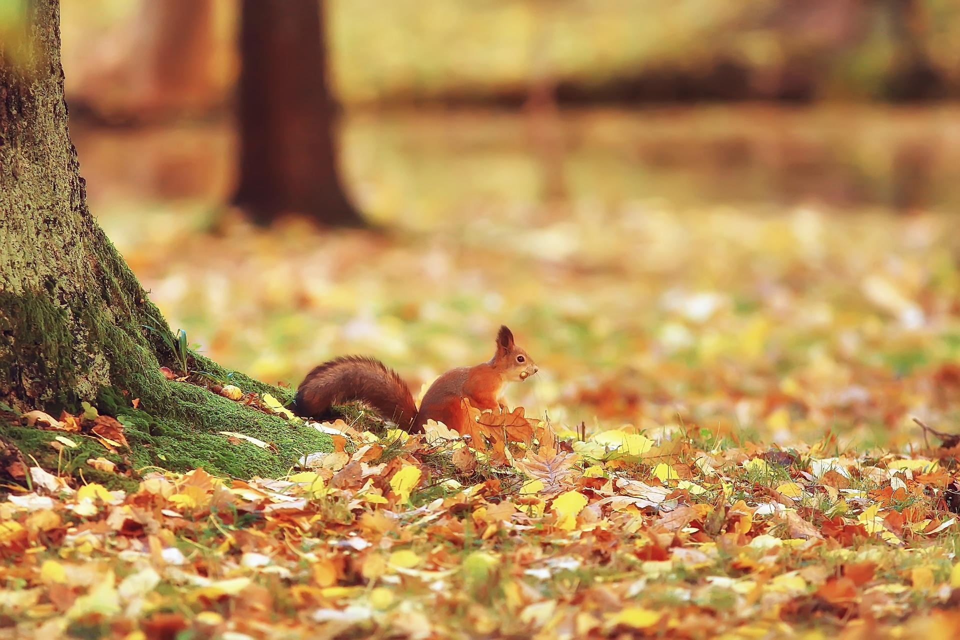 ロンドンの秋の風景 イギリスの風景