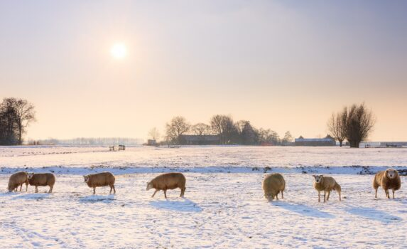 冬の夕暮れの風景 オランダの風景