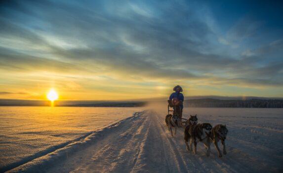 雪原を行く犬ぞり フィンランドの風景