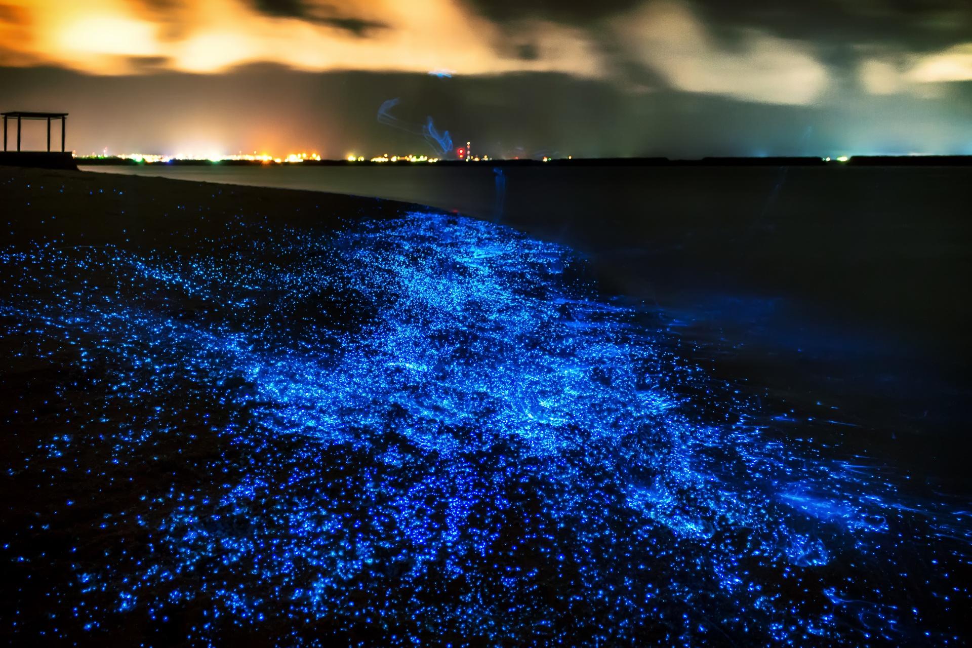 光る砂浜 モルディブの風景