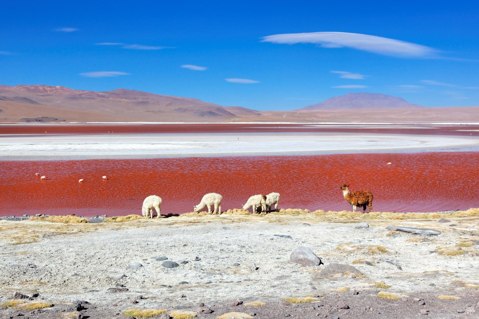 ラグナ・コロラダ ボリビアの風景