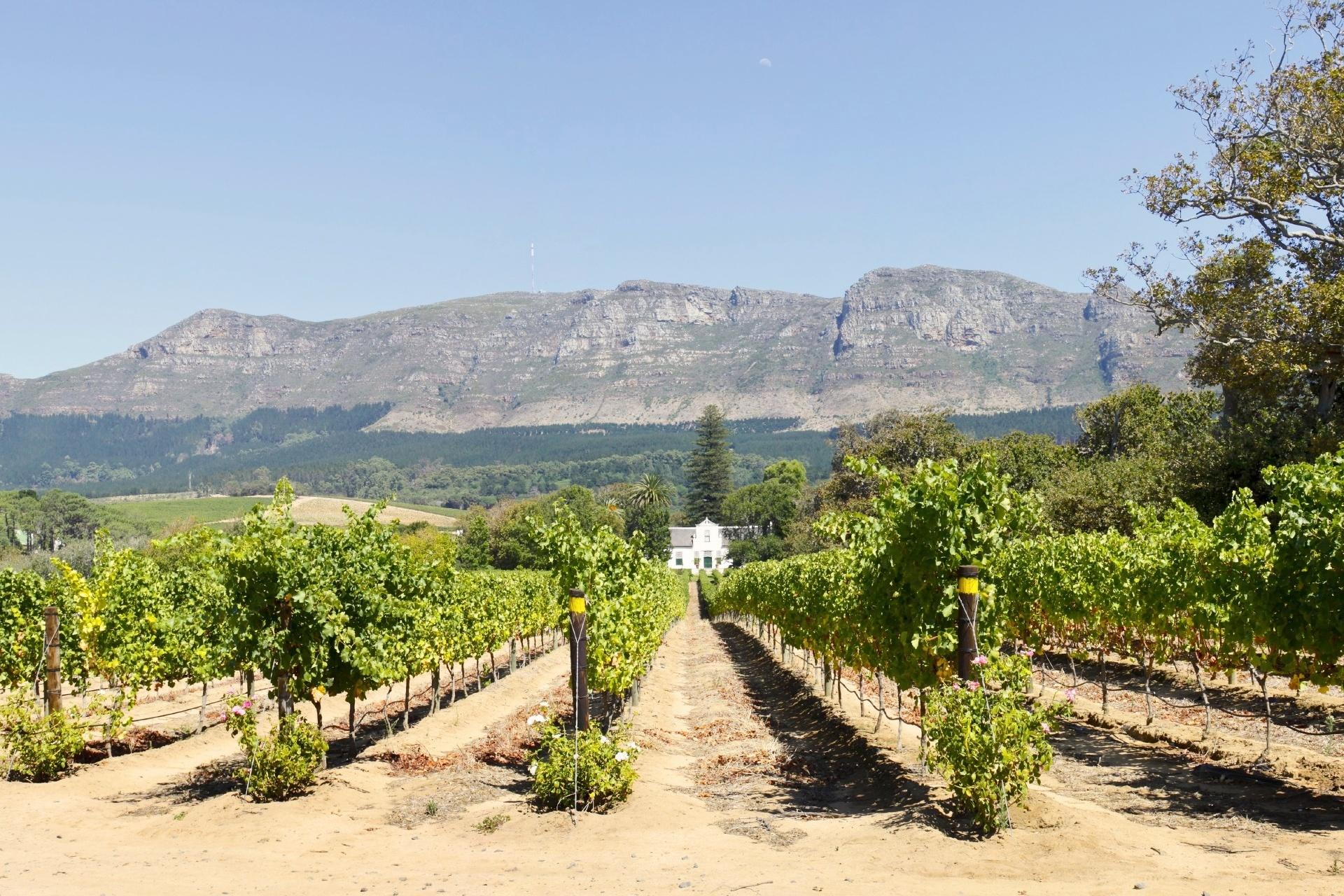 コンスタンシアの風景 南アフリカの風景