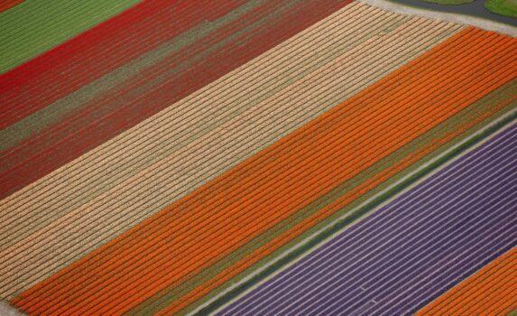 空から見た球根畑 オランダの風景
