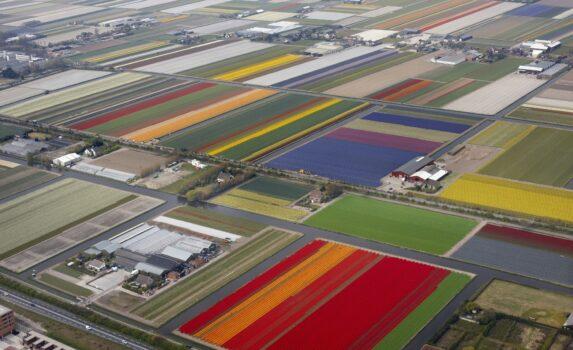 球根畑の風景 オランダの風景