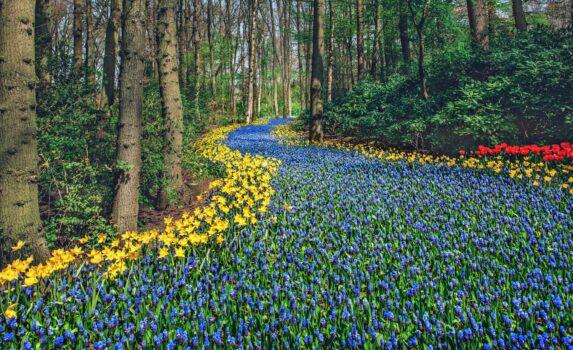 キューケンホフ公園の春の風景 オランダの風景