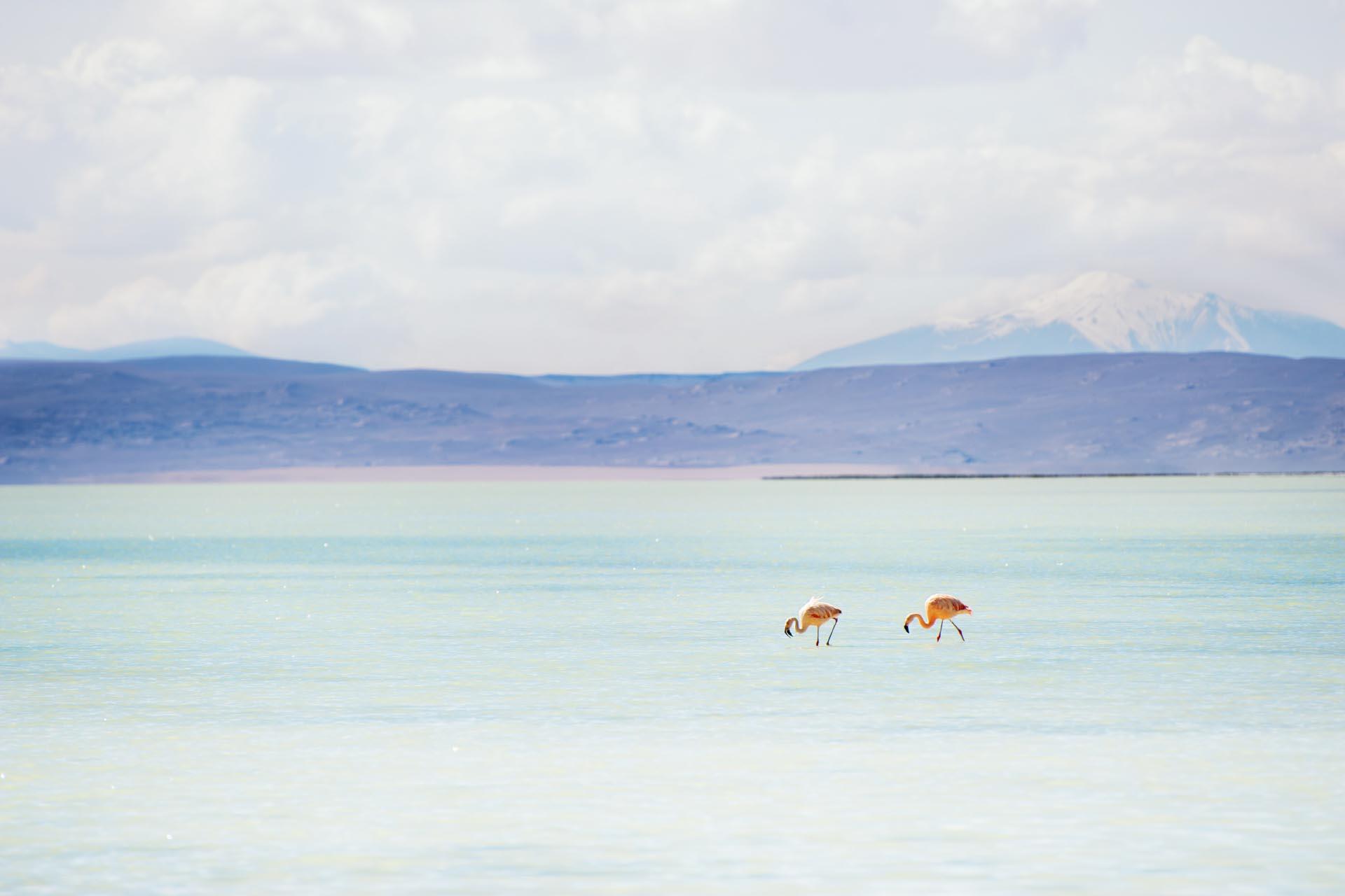 アルティプラノ高原の風景 ボリビアの風景