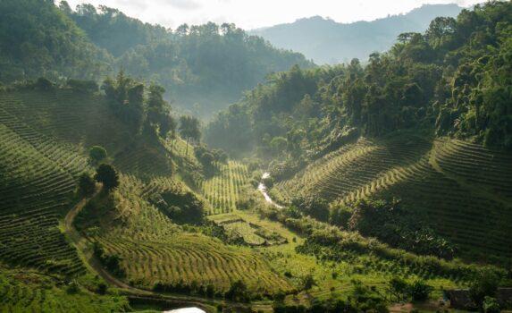 チェンライの茶畑の風景 タイの風景