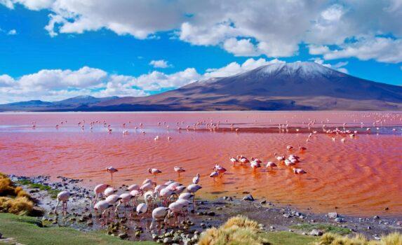 フラミンゴとラグナ・コロラダ ボリビアの風景