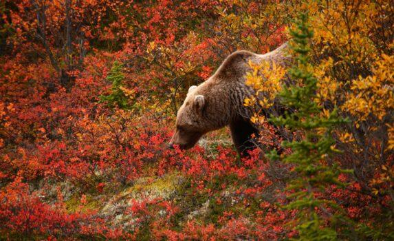 秋のアラスカ アメリカの風景
