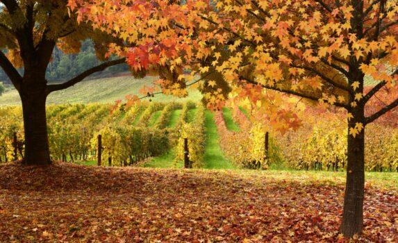 秋のビクトリア オーストラリアの秋の風景