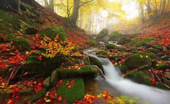 カルパティア山脈の秋の森の風景